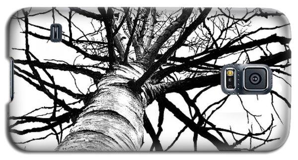 Lone Birch Galaxy S5 Case