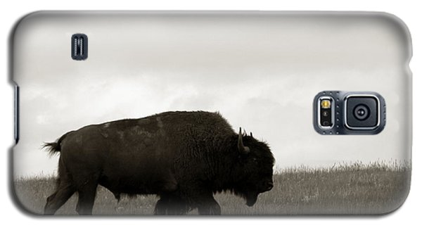 Lone Bison Galaxy S5 Case by Olivier Le Queinec