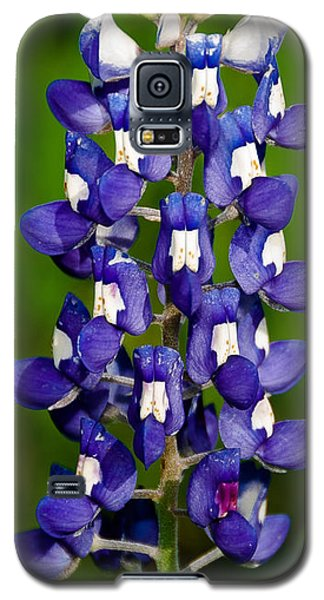 Galaxy S5 Case featuring the photograph Lone Bluebonnet by Dee Dee  Whittle
