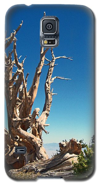 Galaxy S5 Case featuring the photograph Lone Bristlecone by Alan Socolik