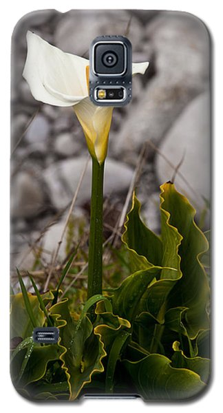 Lone Calla Lily Galaxy S5 Case by Melinda Ledsome