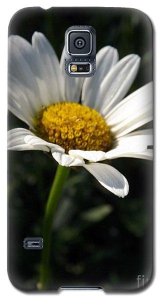 Lone Daisy Galaxy S5 Case by Sara  Raber