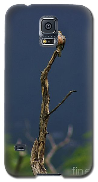 Galaxy S5 Case featuring the photograph Lone Dove by Craig Wood
