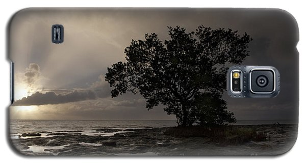 Lone Mangrove Galaxy S5 Case by Keith Kapple