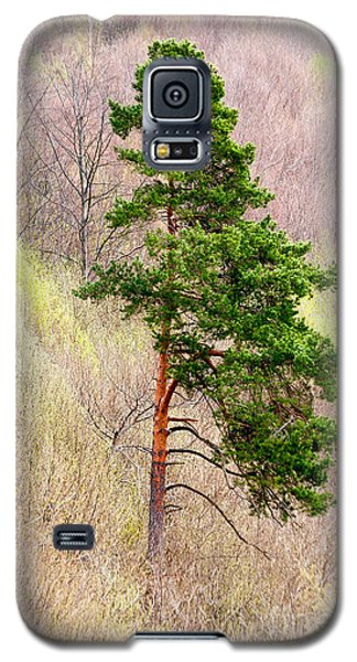 Galaxy S5 Case featuring the photograph Lone Pine by Les Palenik