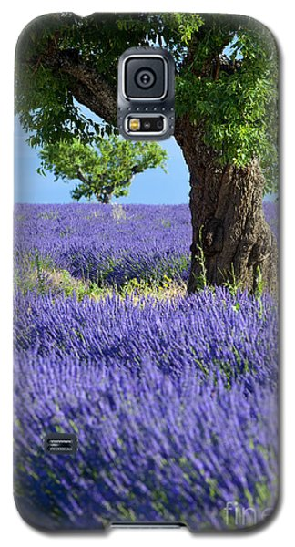 Lone Tree In Lavender Galaxy S5 Case