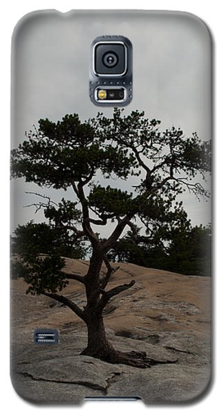 Lone Tree In Stone Mountain State Park North Carolina Galaxy S5 Case