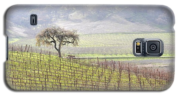 Lone Tree In The Vineyard Galaxy S5 Case