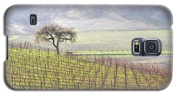 Lone Tree In The Vineyard Galaxy S5 Case by AJ  Schibig