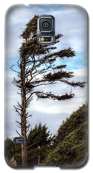 Lone Tree Galaxy S5 Case by Melanie Lankford Photography
