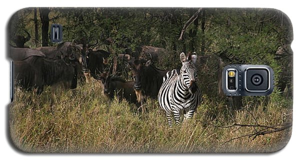 Galaxy S5 Case featuring the photograph Lone Zebra by Joseph G Holland