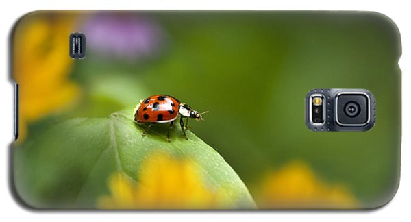 Lonely Ladybug Galaxy S5 Case by Christina Rollo