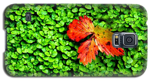 Galaxy S5 Case featuring the photograph Lonely Leaf by Charlie and Norma Brock