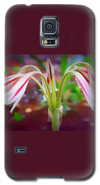 Galaxy S5 Case featuring the photograph Lonely Lilly by Debra Forand