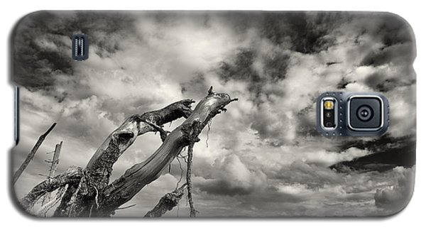 Lonely Tree Roots Reaching For The Sky Galaxy S5 Case