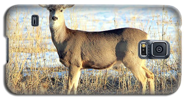 Galaxy S5 Case featuring the photograph Lonesome Doe Sunset by Barbara Chichester