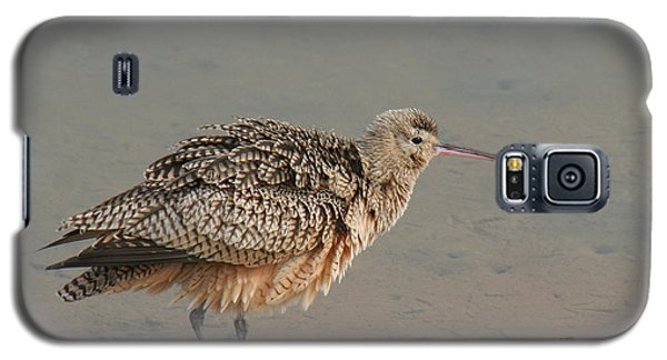 Galaxy S5 Case featuring the photograph Long-billed Curlew by Bob and Jan Shriner