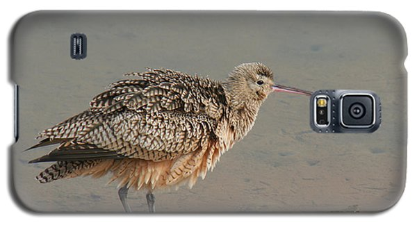 Long-billed Curlew Galaxy S5 Case