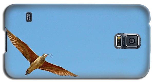 Long-billed Curlew In Flight Galaxy S5 Case