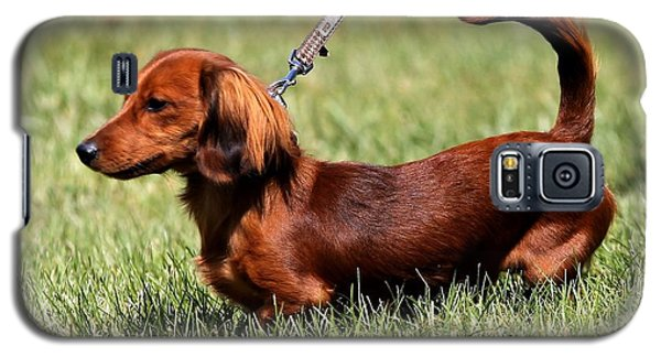 Long Haired Dachshund Galaxy S5 Case