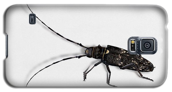 Long-hornded Wood Boring Beetle Monochamus Sartor - Coleoptere Monochame Tailleur - Galaxy S5 Case