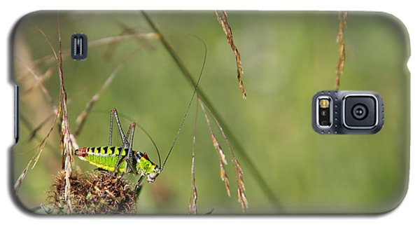 Galaxy S5 Case featuring the photograph Long-horned Katydid by Jivko Nakev