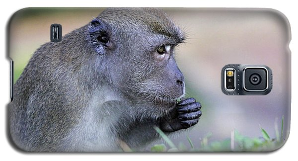 Galaxy S5 Case featuring the photograph Long Tailed Macaque Feeding by Shoal Hollingsworth