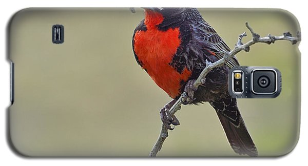 Long-tailed Meadowlark Galaxy S5 Case by Tony Beck