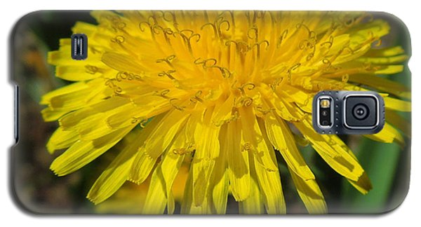 Look For The Positive Galaxy S5 Case by Heidi Manly