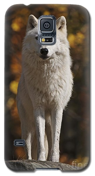 Galaxy S5 Case featuring the photograph Look Out by Wolves Only