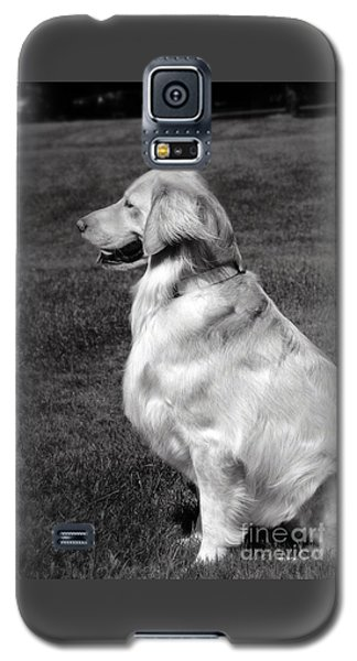 Looking Golden Galaxy S5 Case