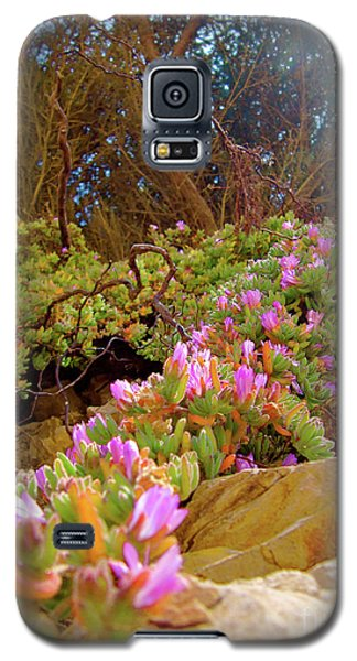 Looking Up Galaxy S5 Case by CML Brown