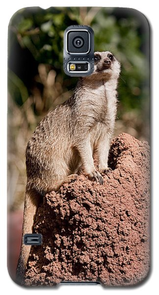 Lookout Post Galaxy S5 Case by Michelle Wrighton