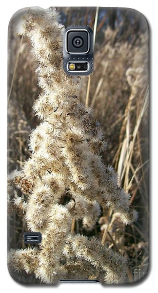 Galaxy S5 Case featuring the photograph Looks Like Cotton by Sara  Raber