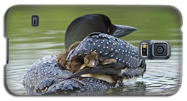 Loon Galaxy S5 Case - Loon Chick - Peek A Boo by John Vose