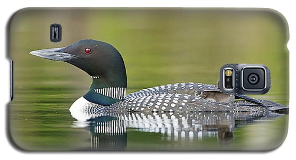 Loon Galaxy S5 Case - Loon Chick With Parent - Quiet Time by John Vose