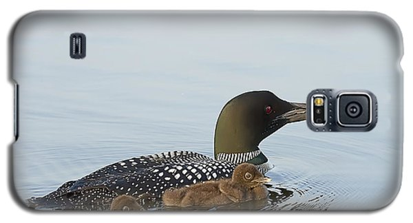 Loon Chicks Cruising With Mom Galaxy S5 Case