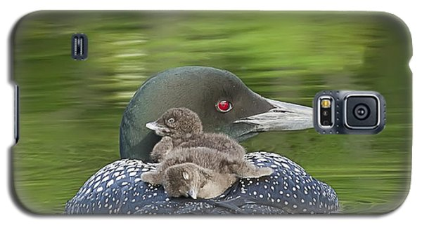 Loon Galaxy S5 Case - Loon Chicks -  Nap Time by John Vose