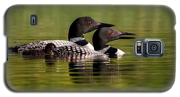 Loon Family Galaxy S5 Case by Kelly Marquardt