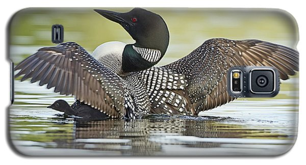Loon Galaxy S5 Case - Loon Wing Spread With Chick by John Vose