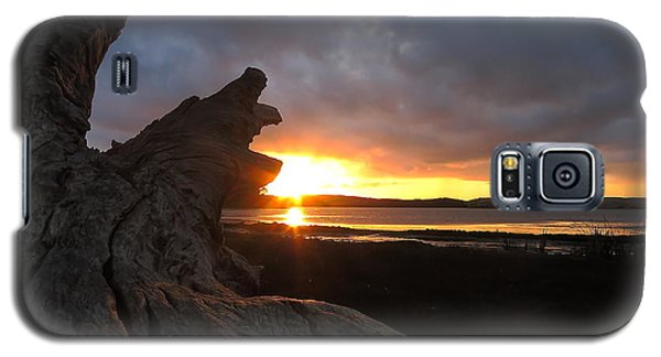 Los Osos Driftwood Galaxy S5 Case by Paul Foutz