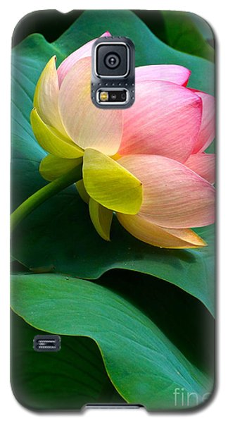 Lotus Blossom And Leaves Galaxy S5 Case by Byron Varvarigos