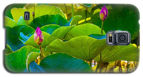 Lotus Garden Galaxy S5 Case by Roselynne Broussard