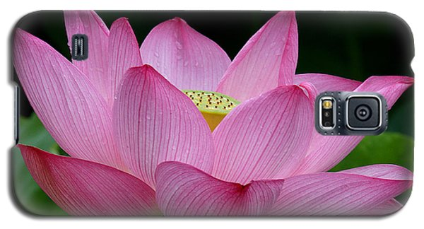 Lotus-center Of Being IIi Dl033 Galaxy S5 Case