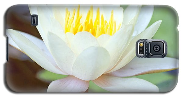 Lotus Flower 02 Galaxy S5 Case