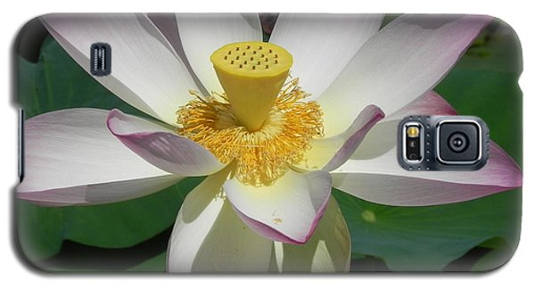 Galaxy S5 Case featuring the photograph Lotus Flower by Chrisann Ellis