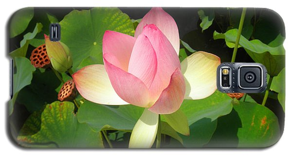 Galaxy S5 Case featuring the photograph Lotus I by David Klaboe