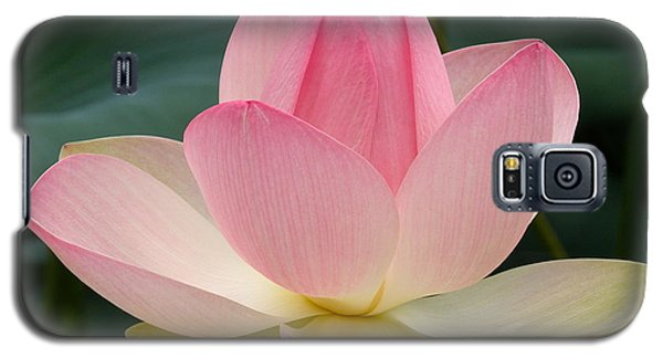 Lotus In Bloom Galaxy S5 Case by Byron Varvarigos