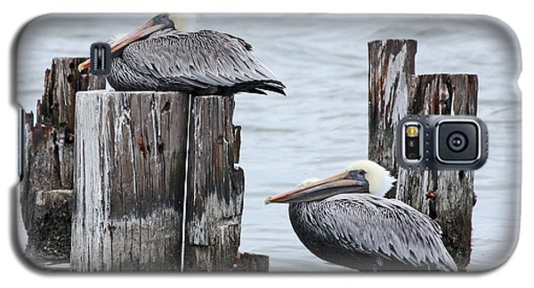 Louisiana Pelicans On Lake Ponchartrain Galaxy S5 Case by Luana K Perez