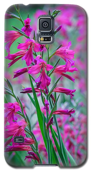 Louisiana Pink Iris Fulva Galaxy S5 Case by Ester  Rogers